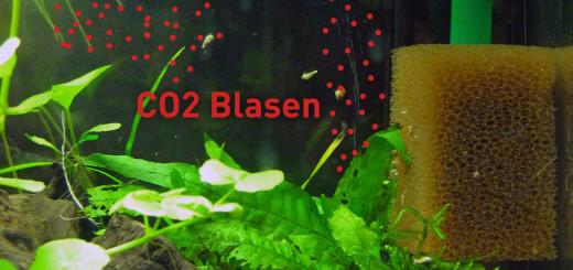 Beste CO2 Verteilung durch Platzierung des Diffusors unter dem Ausströmer
